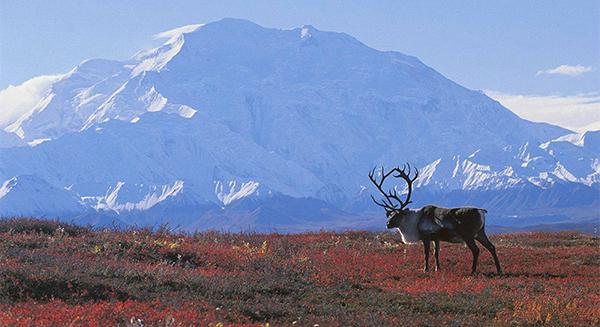 Vegetação do continente americano - tundra