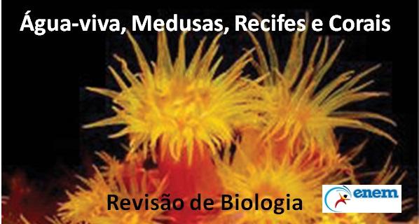 Zoologia – Aula de revisão do reino Animalia para Biologia Enem. Confira.