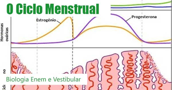 O Ciclo Menstrual nas Mulheres