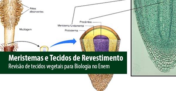 Revisão Para O I Simulado Enem: Revisão De Biologia Para O Enem