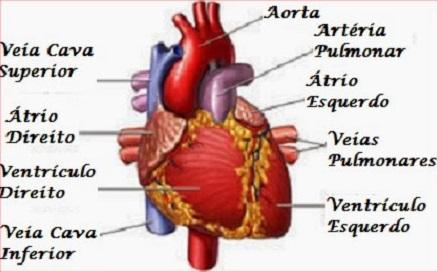 Trabalha com músculos como os sistema o circulatório