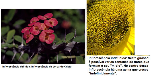 Tipos de flor – Revise Biologia com o Blog do Enem