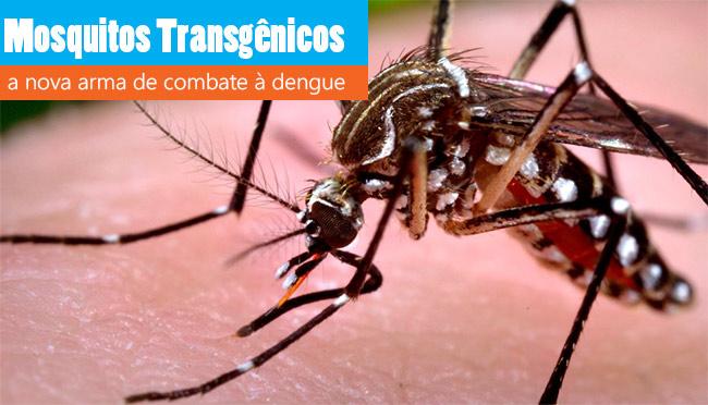 Mosquitos transgênicos
