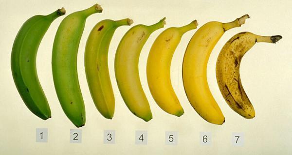 hormônios dos vegetais - Revisão de Biologia - Enem