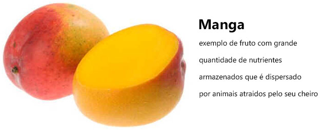 Estrutura dos frutos