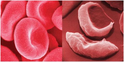 Proteínas - Revisão de Biologia Enem