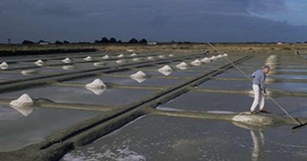 sais-minerais