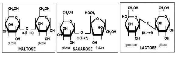 Tipos de Carboidratos - Biologia