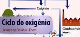 Ciclo do oxigênio – Revisão de Biologia Enem