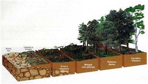 Sucessão ecológica: Revise ecologia para gabaritar Biologia no Enem