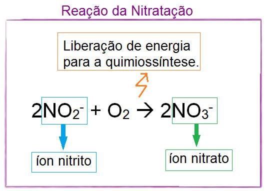 Ciclo do nitrogênio - nitratação
