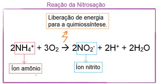 Ciclo do nitrogênio - nitrosação