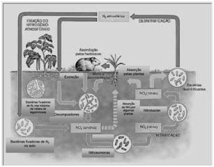 Ciclo do nitrogênio - Biologia Enem
