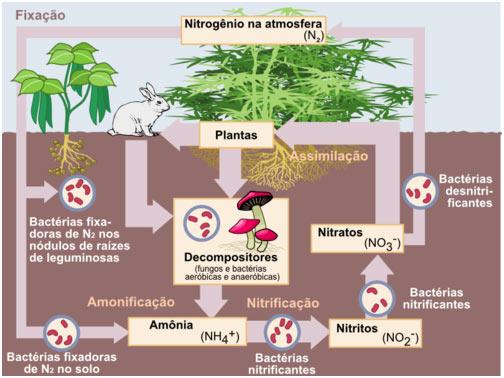 Biologia - Ciclo do Nitrogênio