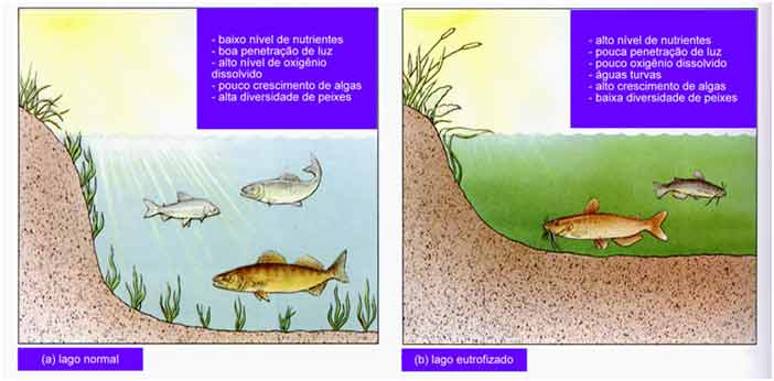 peixes em lago normal e eutrofizado - revisão enem