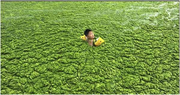eutrofização  de um lago