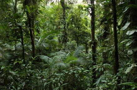 Saiba tudo sobre o bioma da Floresta Tropical