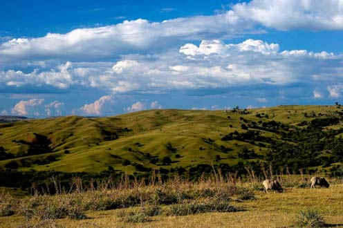 Saiba tudo sobre os biomas terrestres