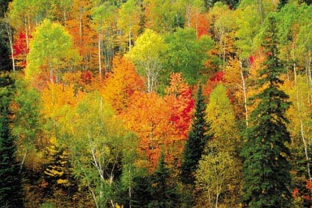 Tudo sobre os grandes biomas terrestres
