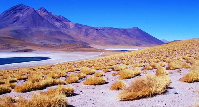 Saiba tudo sobre o bioma do deserto
