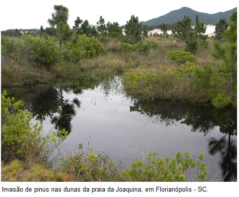 Alterações biológicas e o desequilíbrio ambiental