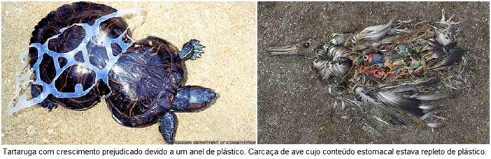 Poluição do plástico atinge animais