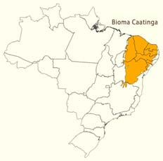 Bioma da Caatinga