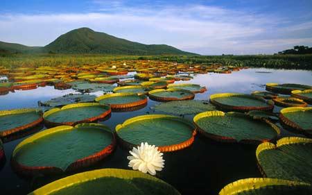 biomas enem pantanal