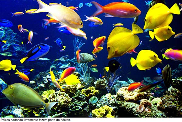 Os ecossistemas aquáticos