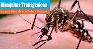 mosquitos-transgenicos
