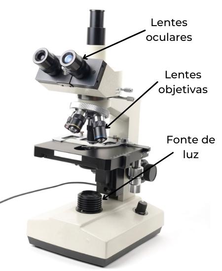 Partes de um microscópio óptico