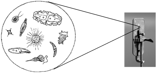 Visualização em um microscópio