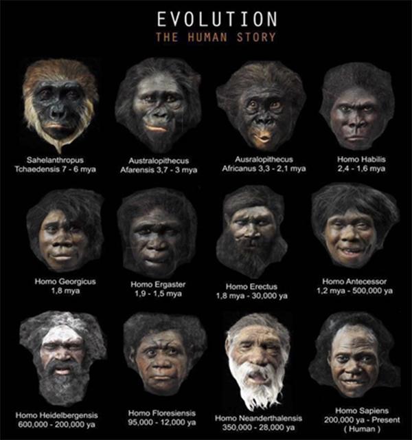 Pré-História e evolução dos hominídeos