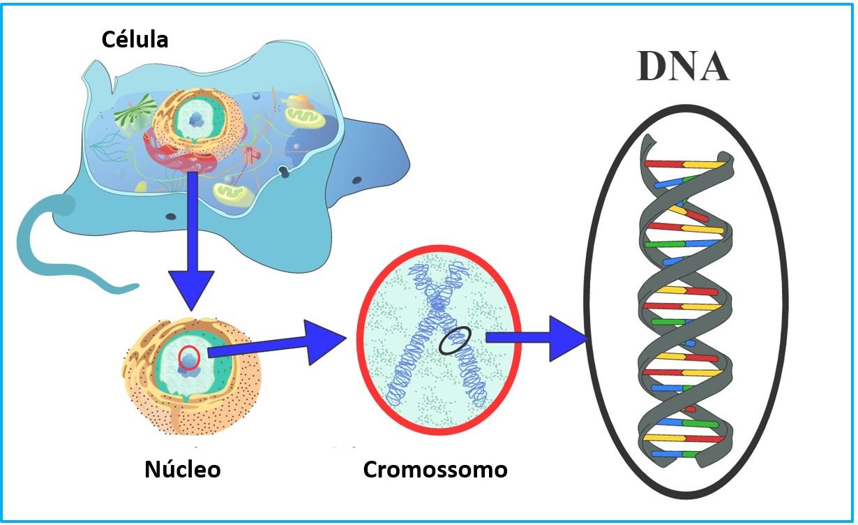 DNA Seres vivos