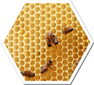 poligono-abelha