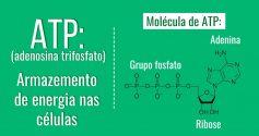 ATP Biologia