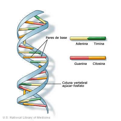 DNA, dupla hélice