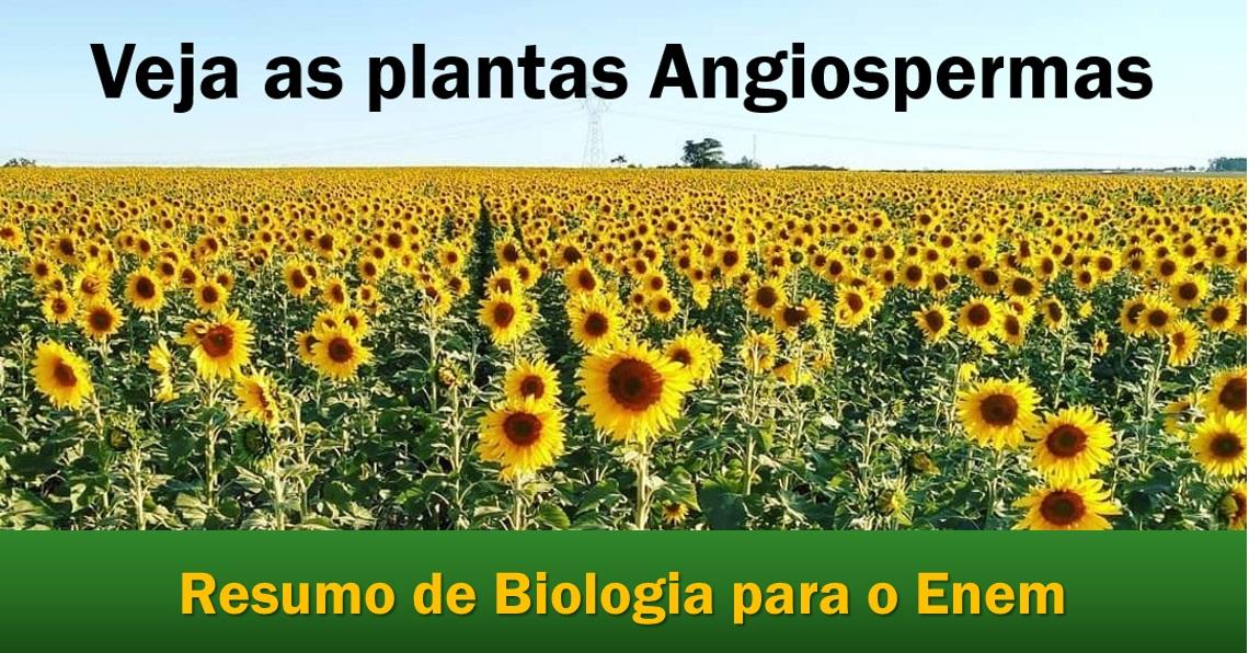 Angiospermas: veja as Monocotiledôneas, e as Dicotiledôneas