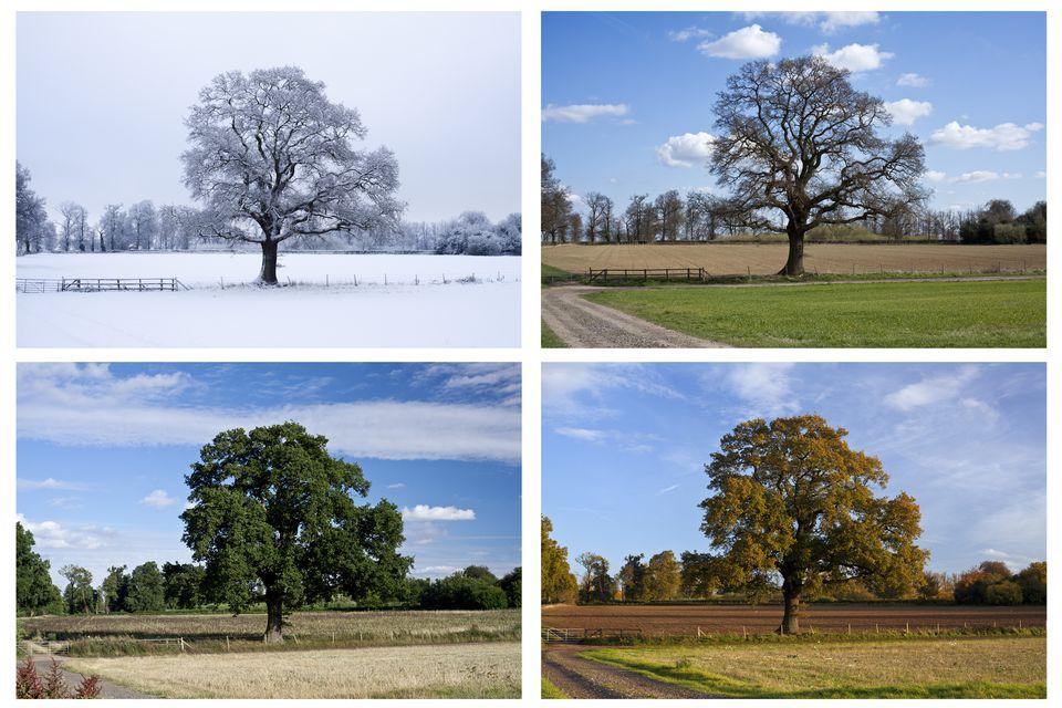 4 estações do ano