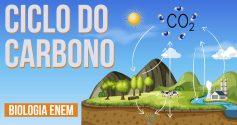 aula sobre ciclo do carbono