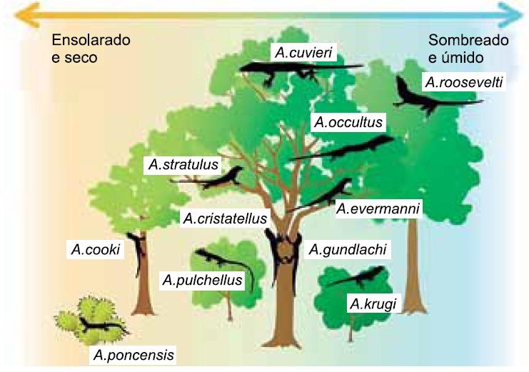 Relações ecológicas - lagartos e árvores