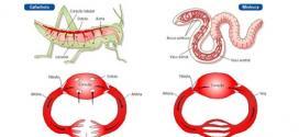 Biologia Enem – Circulação e transporte de substâncias nos animais.