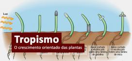 Tropismos – Revise o crescimento orientado das plantas